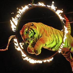 Цирки Вешкаймы