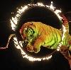 Цирки в Вешкайме